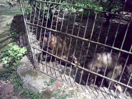 zootgmures19042009-34