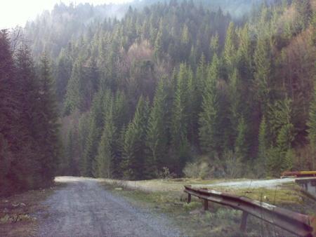 stana-de-vale-lesul-ursului-valul-miresei-27-m