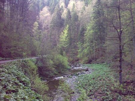 stana-de-vale-lesul-ursului-valul-miresei-42-m