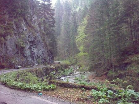 stana-de-vale-lesul-ursului-valul-miresei-49-m