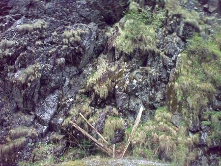 stana-de-vale-lesul-ursului-valul-miresei-54-m