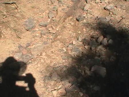 Rezervatia Scarita - Belioara 1 https://sorinplaton.wordpress.com