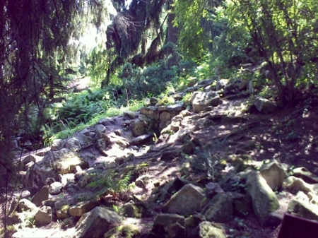 Gradina Botanica Cluj PLATON 19