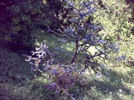 Gradina Botanica Cluj PLATON 20