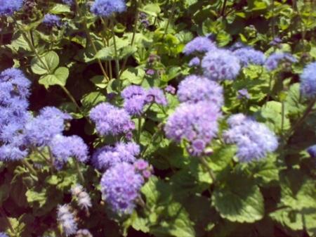 Gradina Botanica Cluj PLATON 23