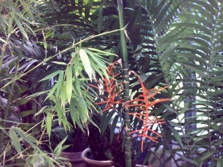 Gradina Botanica Cluj PLATON 30