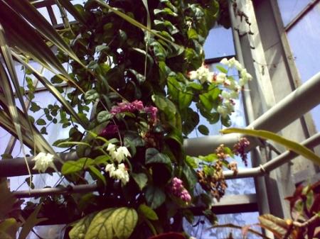 Gradina Botanica Cluj PLATON 35
