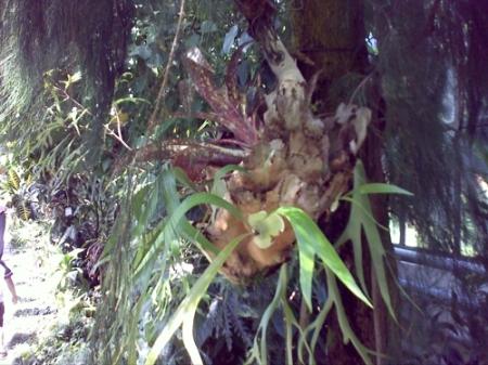 Gradina Botanica Cluj PLATON 41