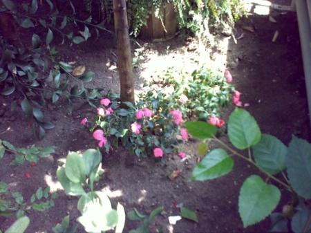Gradina Botanica Cluj PLATON 43