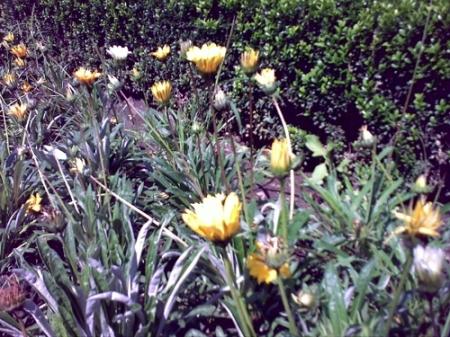 Gradina Botanica Cluj PLATON 45