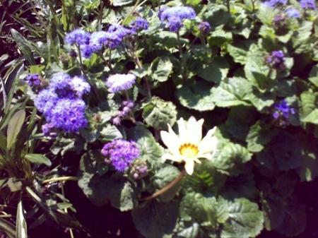 Gradina Botanica Cluj PLATON 46