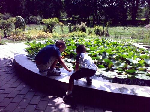 Gradina Botanica Cluj PLATON 49