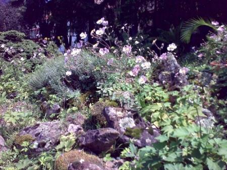 Gradina Botanica Cluj PLATON 53