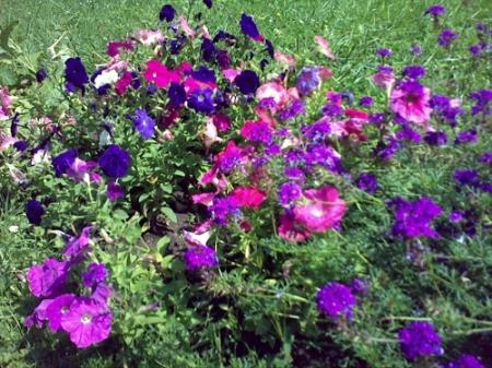 Gradina Botanica Cluj PLATON 54