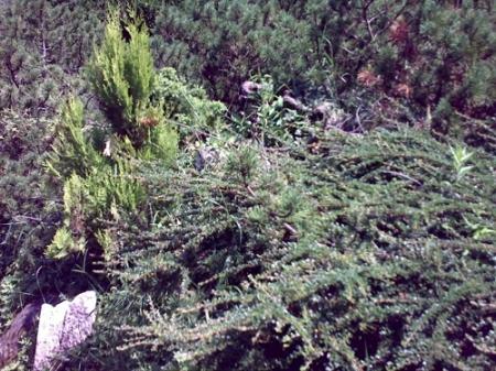 Gradina Botanica Cluj PLATON 9