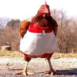 red-fucking-running-social-democrat-hen-chicken