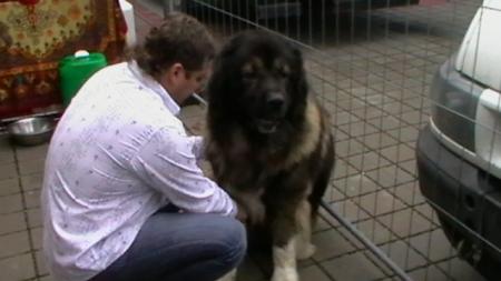World Dog Show Bratislava10