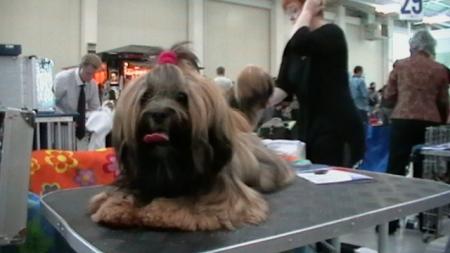 World Dog Show Bratislava11