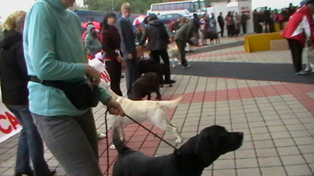 World Dog Show Bratislava5