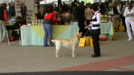 World Dog Show Bratislava6