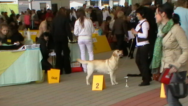 World Dog Show Bratislava8
