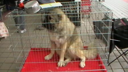 World Dog Show Bratislava9